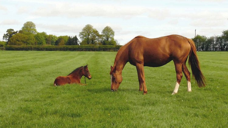 Perfect Practice and her sleepy Foxwedge filly.